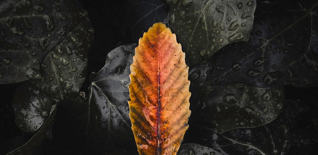 دانلود Adobe Photoshop Lightroom v4.1.1 – آدوبی فتوشاپ لایتروم برنامه ویرایش تصاویر اندروید
