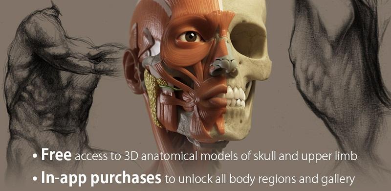 دانلود 3D Anatomy for the Artist FULL نرم افزار آناتومی سه بعدی بدن انسان مخصوص اندروید