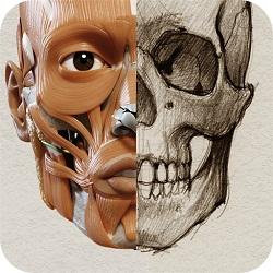 دانلود 3D Anatomy for the Artist FULL 1.2.7.1 - اپلیکیشن آناتومی سه بعدی بدن انسان برای اندروید