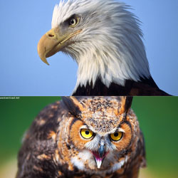 دانلود عکس پرندگان زیبا 2019 با کیفیت فول اچ دی