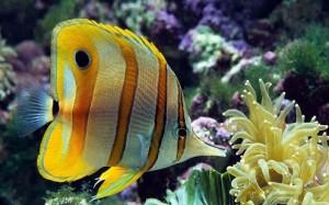 IOS 7 Marine Aquarium Theme (1)