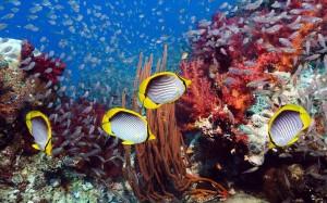 IOS 7 Marine Aquarium Theme (2)