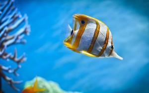 IOS 7 Marine Aquarium Theme (4)