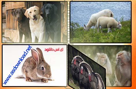 دانلود عکس های جدید سال ۲۰۱۲ از ۵۰ حیوان با شخصیت و محترم