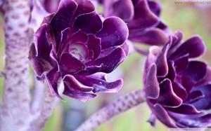 beautiful flowers wallpaper 11