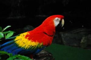 bird-wallpaper_[www.asdownload.net] (1)