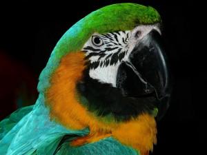 bird-wallpaper_[www.asdownload.net] (10)