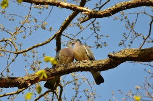 bird-wallpaper_[www.asdownload.net] (12)