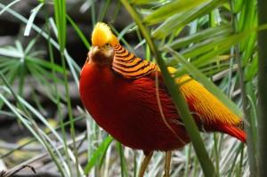 bird-wallpaper_[www.asdownload.net] (7)