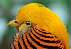 bird-wallpaper_[www.asdownload.net] (8)