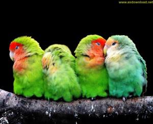 birds photo hd-[www.asdownload.net] (22)