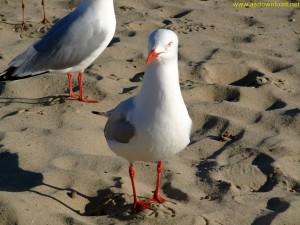 birds photo hd-[www.asdownload.net] (4)