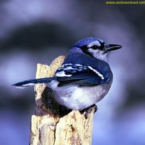 birds photo hd-[www.asdownload.net] (9)