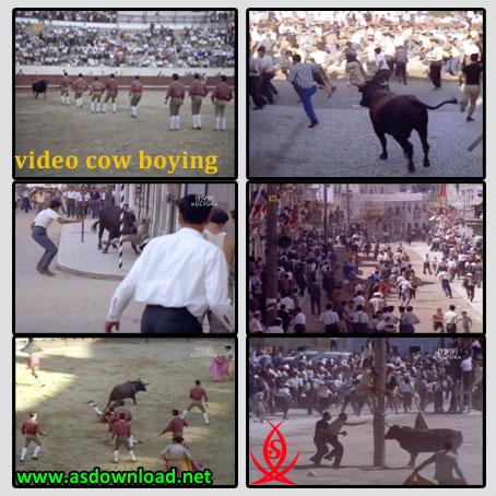 دانلود فیلم مستند گاوبازی cow boying