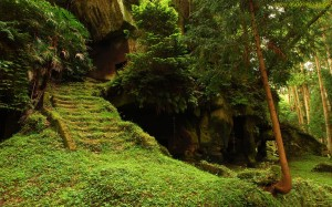 forest staircase ruins wallpaper