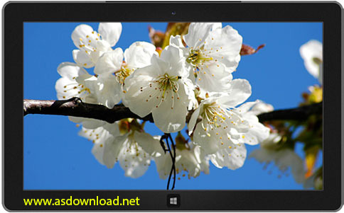 spring theme windows 8
