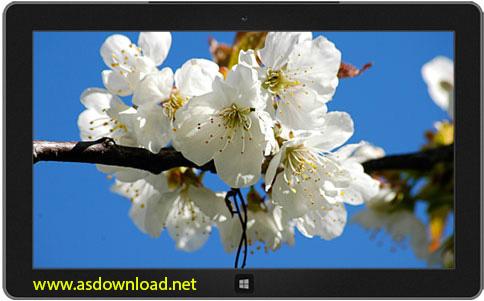 spring theme windows 8